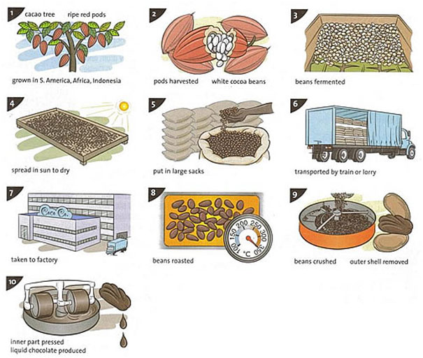 cacao proces