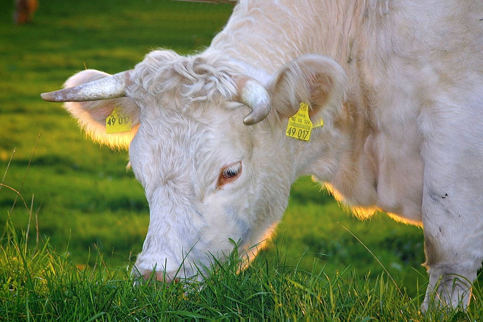 bio koe