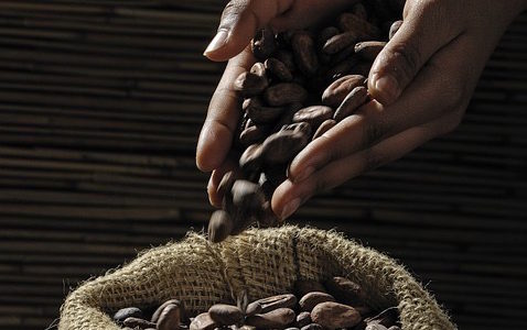 Rauwe cacao