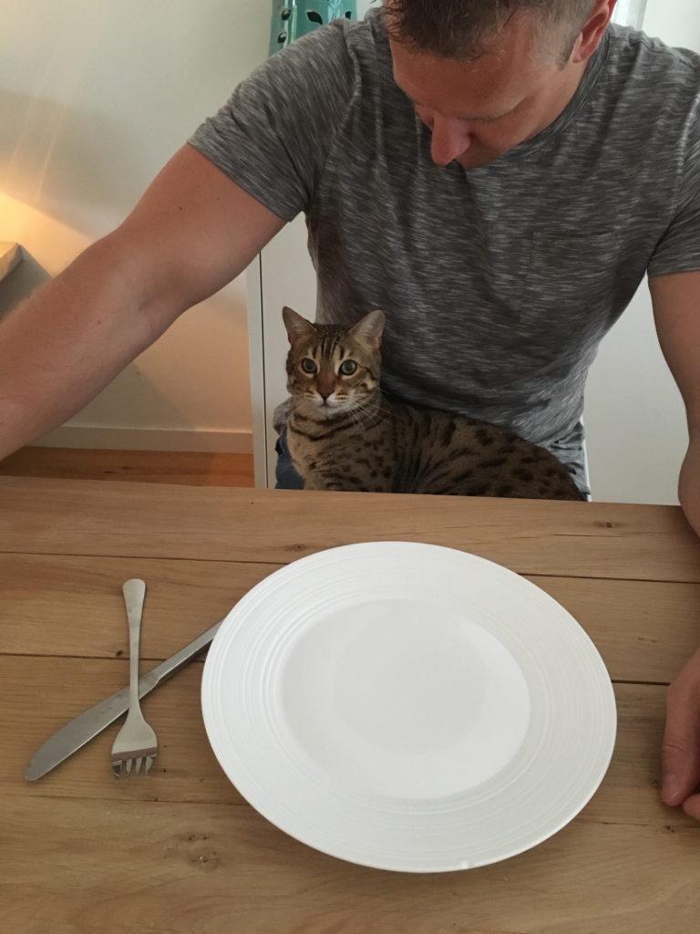kat aan tafel